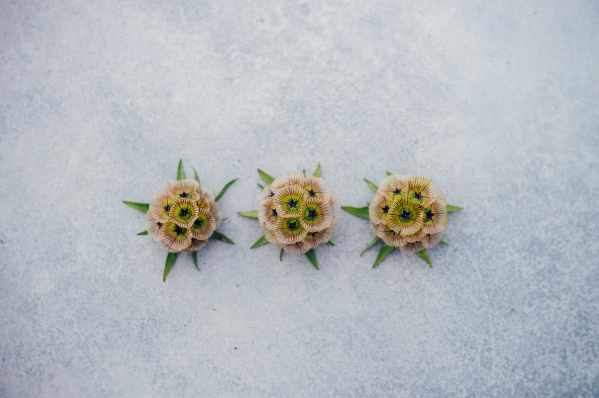 3 onion flowers placed to mimic 3 Michelin stars