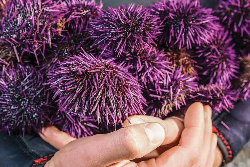 Sea urchins 800 307x0x840x561 q85