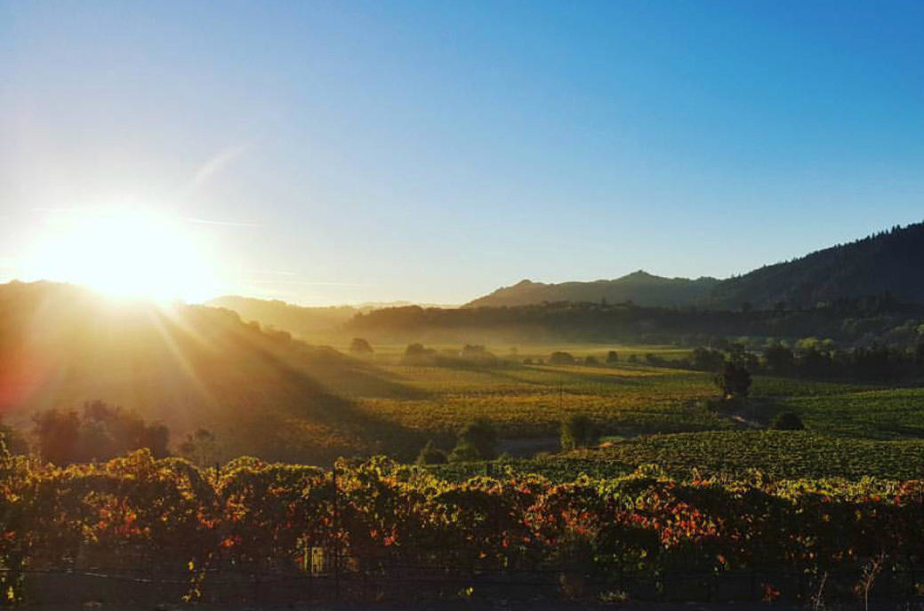 Sunrise over Sonoma wine vineyards